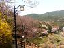 구봉산에서 수정산까지의 봄