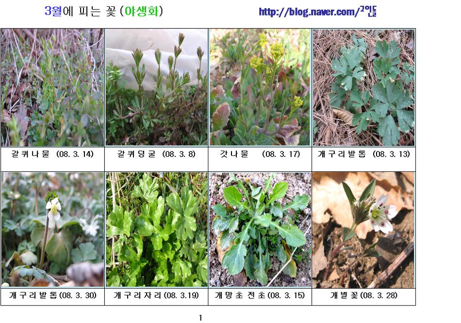 08-봄에 피는 꽃 (3월-1)